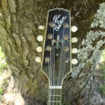 Peghead view of the extremely rare Lloyd Loar signed A-5 Gibson mandolin